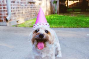 chien marrant durant une fête soirée d'anniversaire